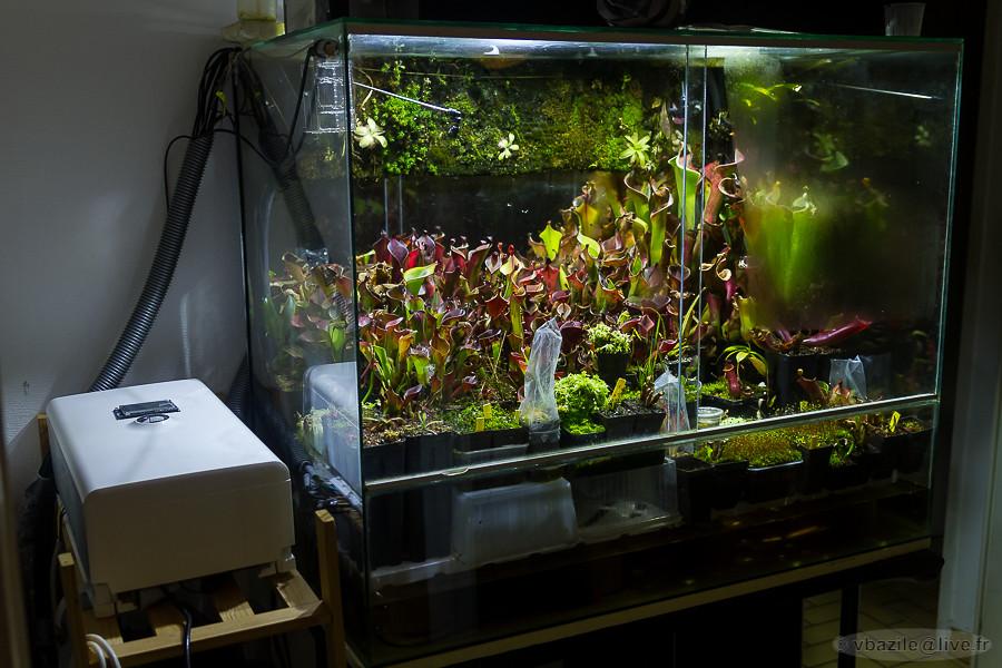 Kuvahaun tulos haulle nepenthes terrarium