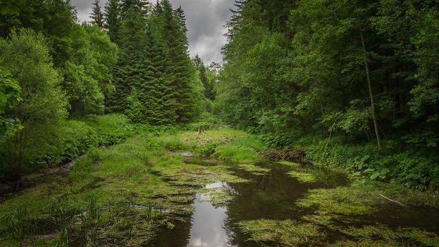 Ladislav  alom - Bohemian Forest