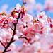 粉紅的季節~