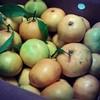 Mandarinas de Citrics El Pla ...increíbles! #hermeneus