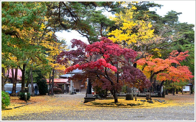 秋田千秋公園010-DSC_3539