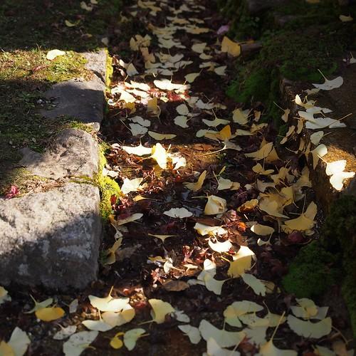 秋の奈良公園を行く