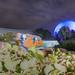 Nemo Sea's Spaceship Earth