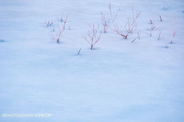 Blue ice2