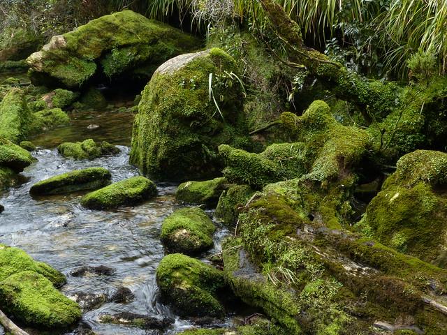 Limestone Boulders, Bullock Creek,Paparoa National Park