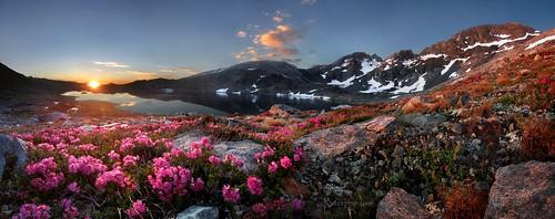 california pink lake mountains flower sunrise hiking meadow hike sierra backpacking wilderness sierranevada jmt johnmuirtrail redheather marielakes mile40