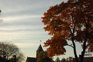 Fall Sunset in Cambridge Common, Harvard Square