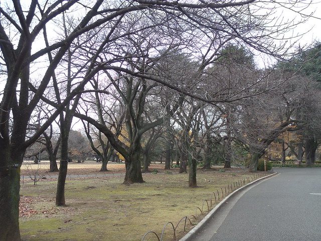 Bare Trees in Shinjuku Gyoen Garden