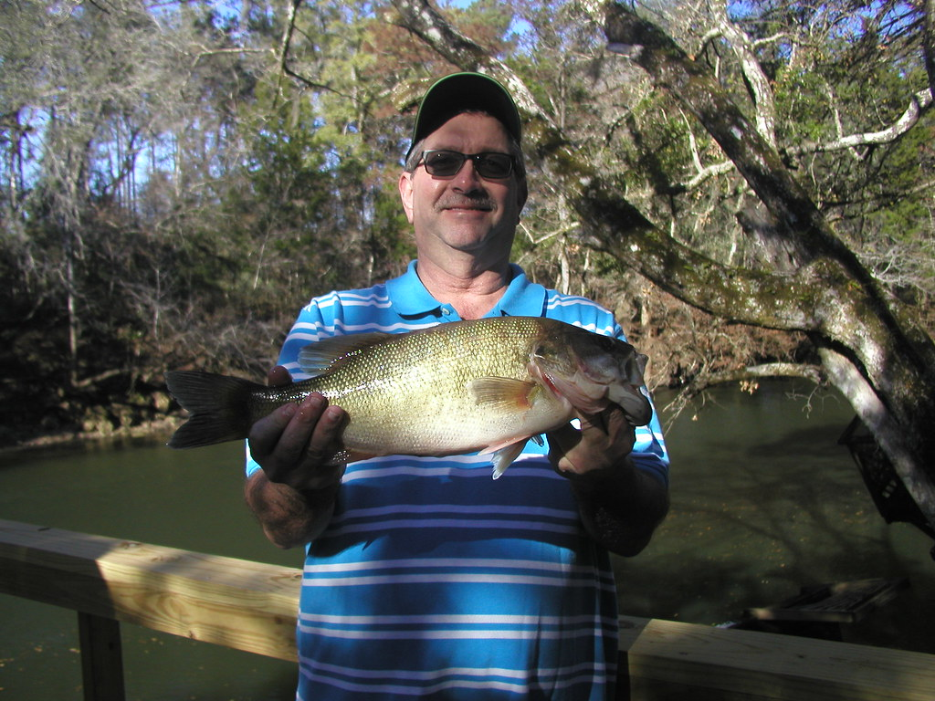 Florida state freshwater fish related keywords for Florida state fish