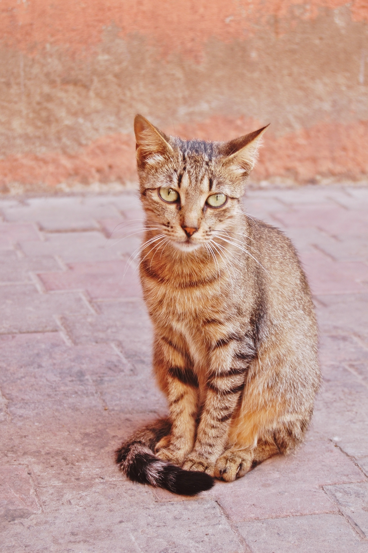 Animaux Marrakech (1)