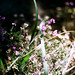 Wildflower Underbrush by joublie