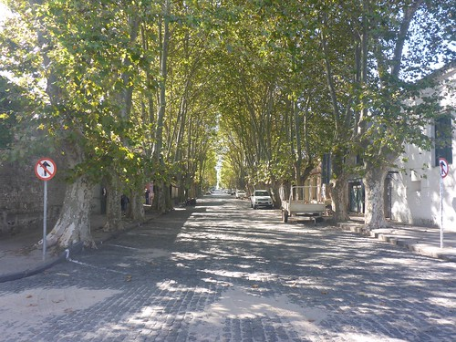 A tree-lined avenue