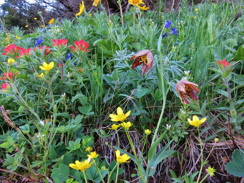 Paintbrush, buttercup, larkspur, balsamroot and chocolate lily