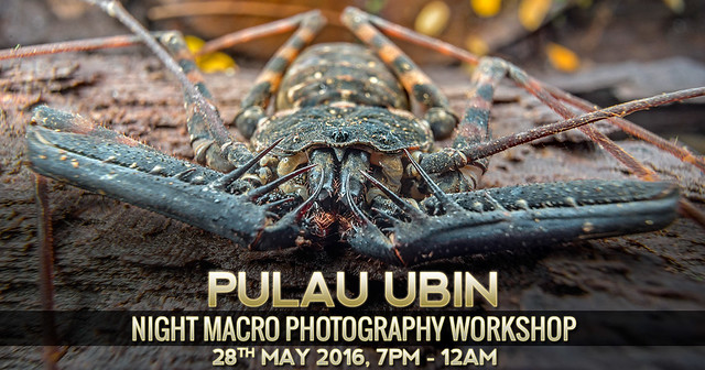 Night Macro Photography Workshop @ Pulau Ubin, 28 May 2016
