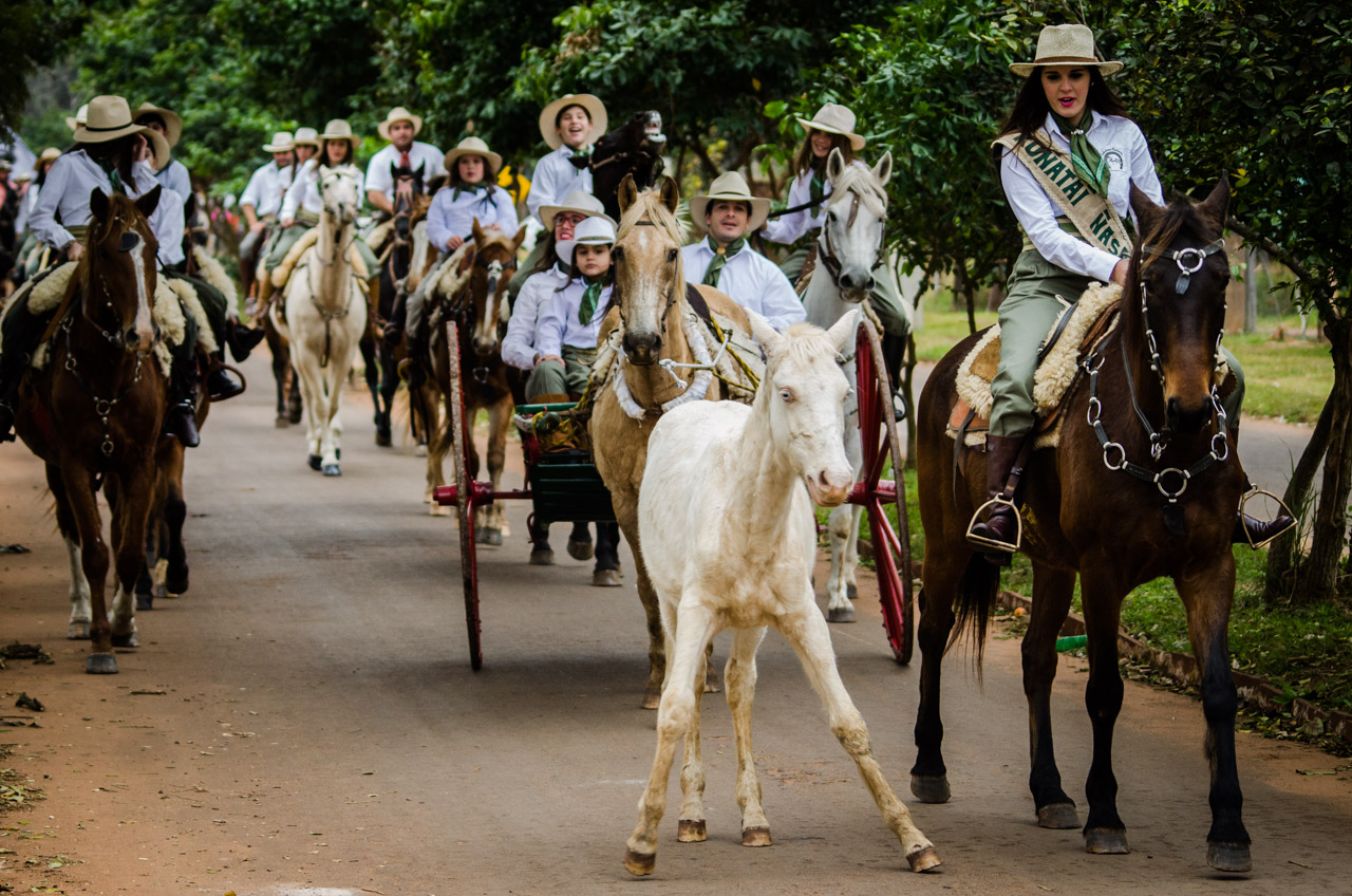 Un potrillo que estaba pastando antes de comenzar el desfile, se confunde con el pasar de la larga fila de caballos y pretende seguirlos durante el tradicional cortejo de caballerías en la ciudad de San Juan, departamento de Misiones. (Elton Núñez)