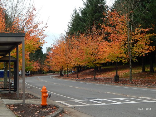 In Corvallis, We Like our Fire Hydrants to Match the Fall Colors