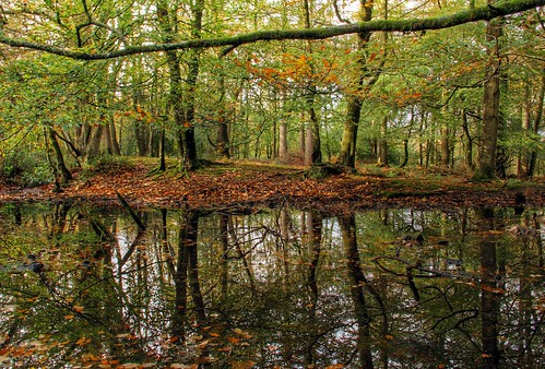 autumn trees reflection water pool forest woodland pond woods somerset quantocks aonb quantockhills