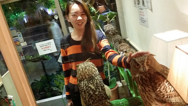 kiba owl cafe 13 - 500yen for 5mins petting 2