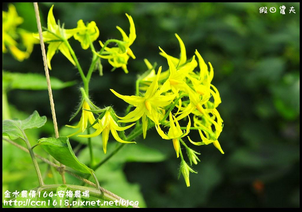 金水農情164-安梅農場_DSC8331