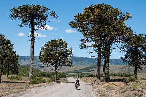 Camino a Icalma