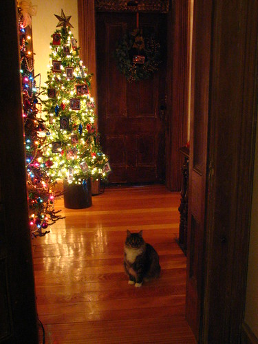 Zilli and the upstairs hall trees