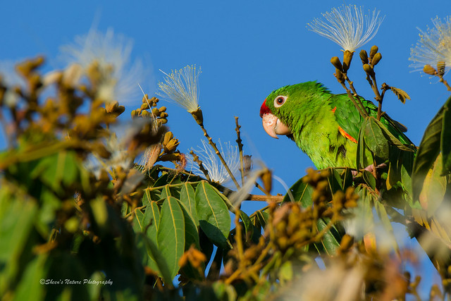Costa Rican Green