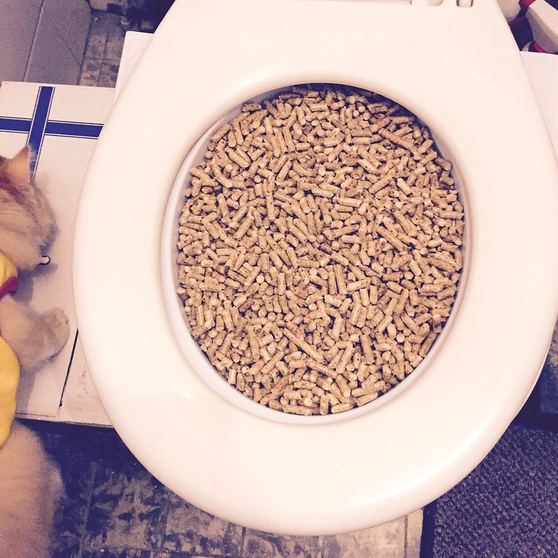 First Week of Toilet Training: How to get used to the kit