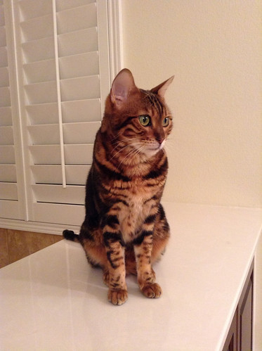 Whiskers & Paws: April 2015