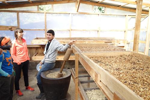 Coffee Tour at Santamaria's Finca Agroturistica