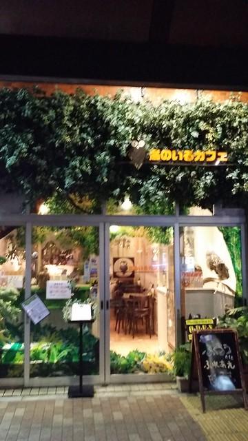 kiba owl cafe 14