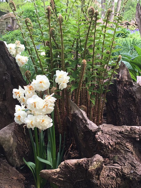 Narcissus, Fern and Stumps (iPhone 6s)