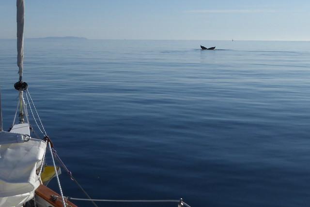 Whale sendoff Kodiak