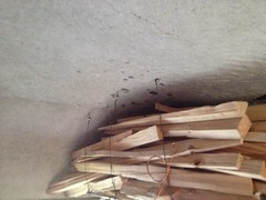 Mold above the wood shelf