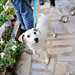 Ice the Dog in Penela da Beira by Gail at Large + Image Legacy