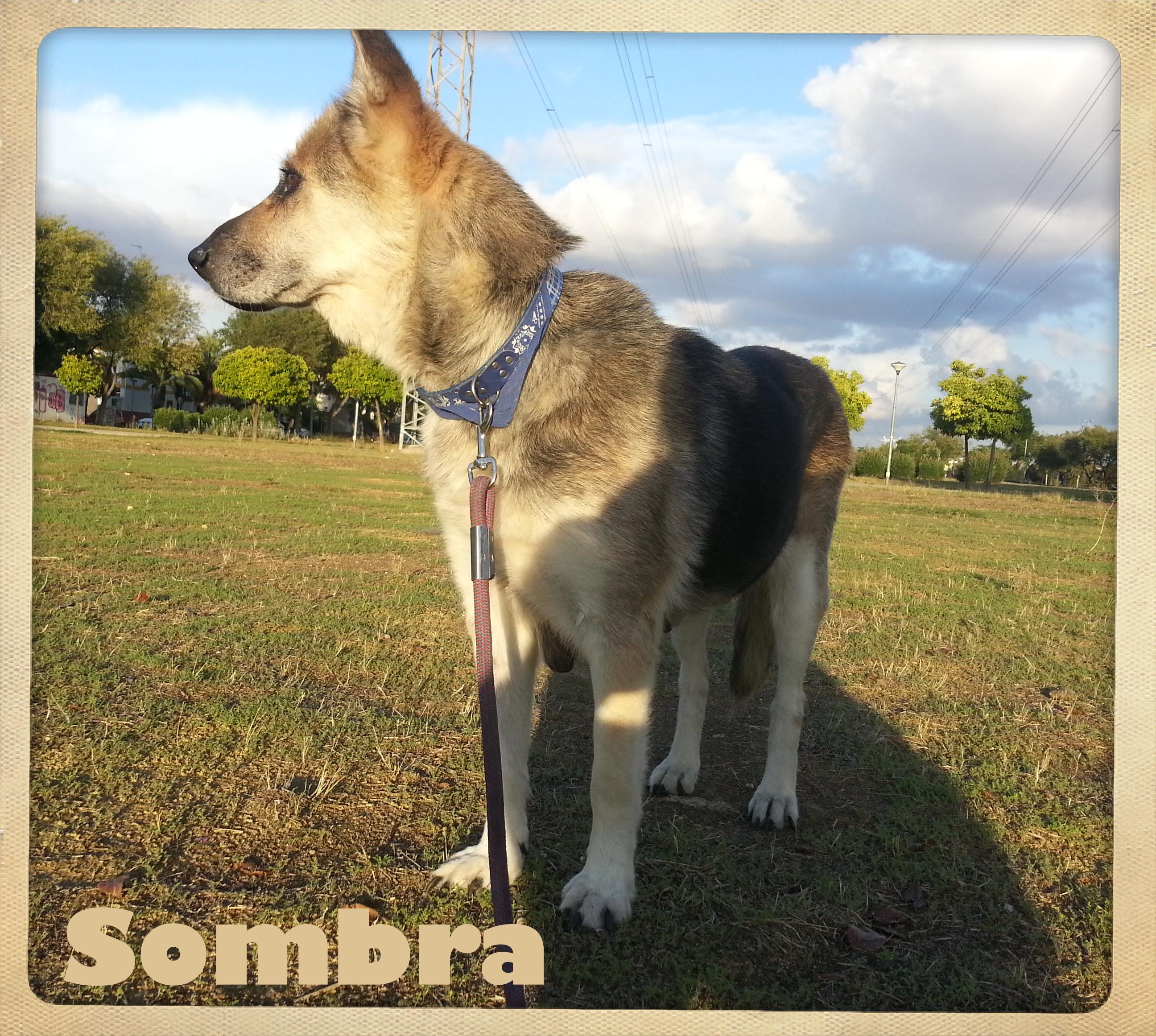 Sombra 4