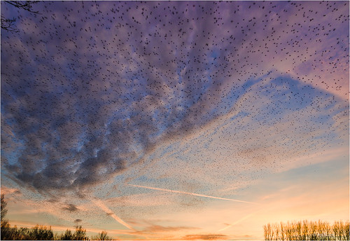 sunset sky sun black color sol birds clouds landscape store angle pentax wide starling stare common sort bif murmuration vulgaris k3 storno europese comune sturnus étourneau stære szpak spreeu sansonnet sturnidae kottarainen protter seregély zwyczajny estúrnidos smcda1650f28edalifsdm