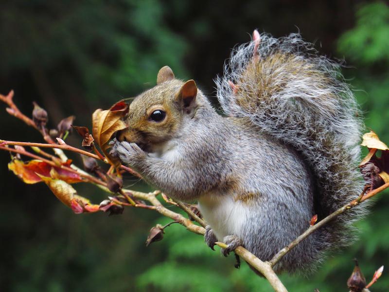 autumn 2014 squirrel