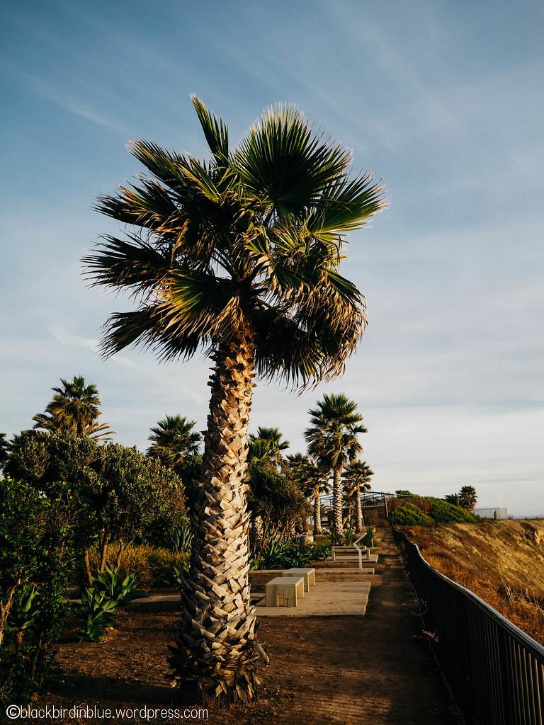 White Point / Royal Palms