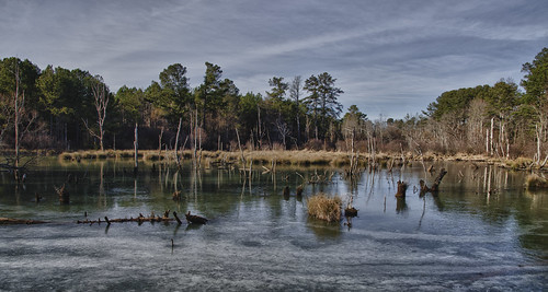 winter ice ga georgia frozen nikon nik marsh 365 marietta day10 marshland 2015 project365 d7000 atl2015project365