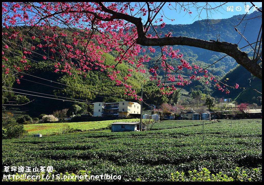 草坪頭玉山茶園DSC_0967