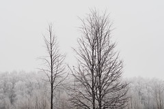 PB260071 trees