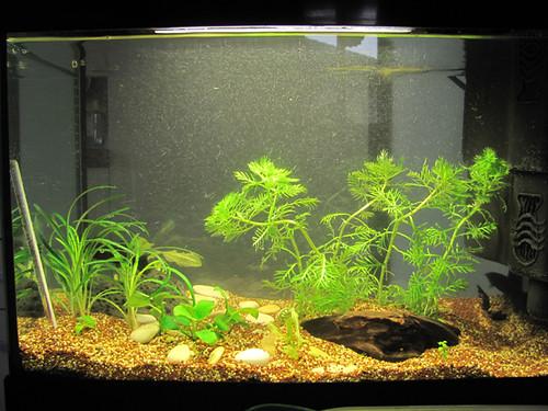 piante acquatiche - acquario - pesci