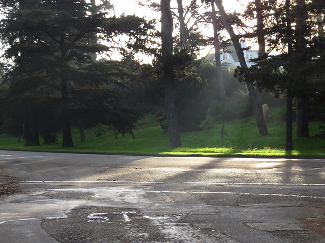 sun rays in golden gate park, san francisco (2015)