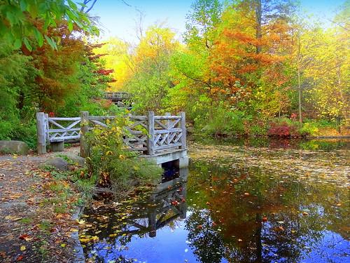 autumn newyork reflection brooklyn image prospectpark dmitriyfomenko fall42014