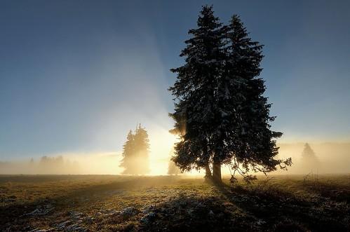 sun mist tree fog sunrise sonnenuntergang nebel sunrays sonne baum feldberg tanne