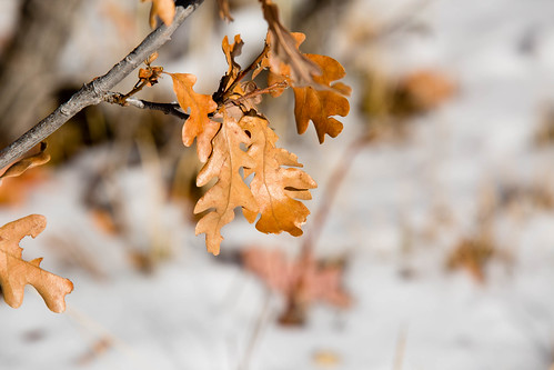 newmexico leaves oak nationalforest taos carsonnationalforest