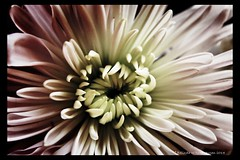 FloralII