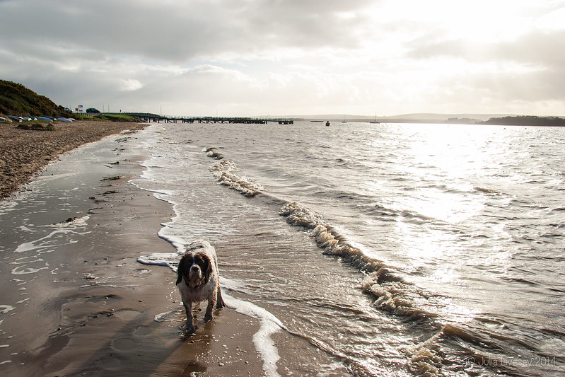 Max on Hamworthy beach