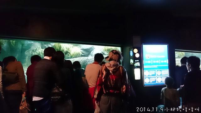【大阪海遊館+天保山】是衝著咖P巴拉桑來的