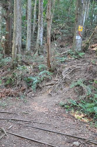 加里山步道-伐木鐵道